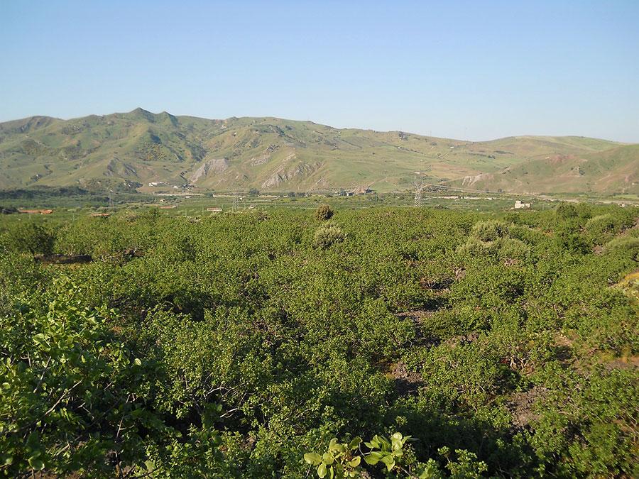 La Valle del Pistacchio - La valle