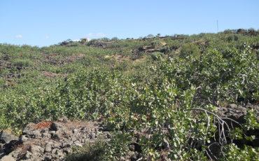 La Valle del Pistacchio - Azienda