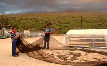 La Valle del Pistacchio - Produttori di pistacchio